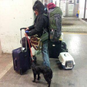 in treno con gatto e cane